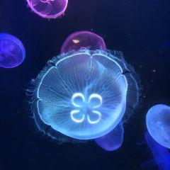 聊城海底世界用戶圖片