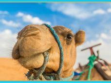 银川+中卫5日4晚私家团·打卡宁夏5A景区+66号公路+沙漠观星露营【一单一团•家庭出行免费升级亲子房•游览时间您做主•行前取消目的地可退全款】【赠送24H接送机或站+沙漠骆驼体验】