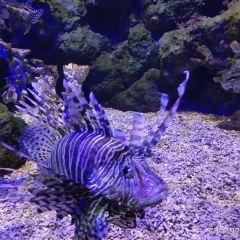Zhengzhou Aquarium User Photo