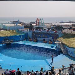 Qingdao Haichang Polar Ocean Park User Photo