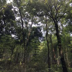 Lingfeng Mountain Sceneic Area User Photo