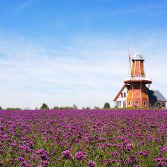 Provence Lavender Manor of Harbin User Photo
