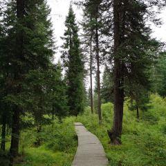 冶力關國家森林公園用戶圖片