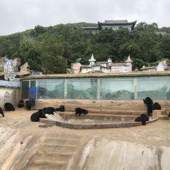 동방 곰 목장 여행 사진