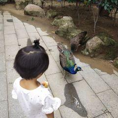臨沂動植物園用戶圖片