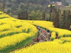 成都+甲居藏寨6日5晚跟团游·嘉阳小火车柳江古镇丹巴藏寨金川梨花轻奢六日游赴一场春之盛宴