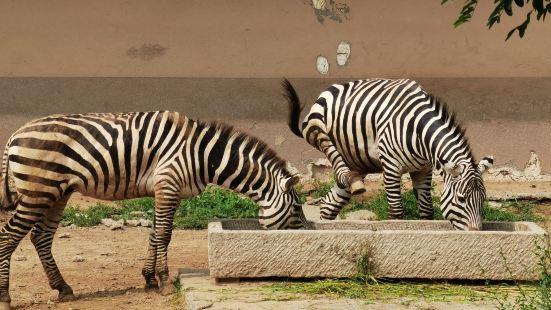 Huanghe Sanjiaozhou Zoo