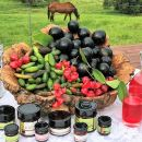 Atherton Tablelands Small-Group Food & Wine Tasting Tour from Port Douglas