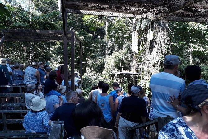 Full-Day Sepilok Orangutan,Sun Bear & Sandakan City Trail from Kota Kinabalu