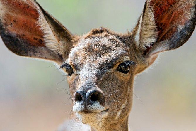 Pilanesberg National Park One Day Safari from Johannesburg