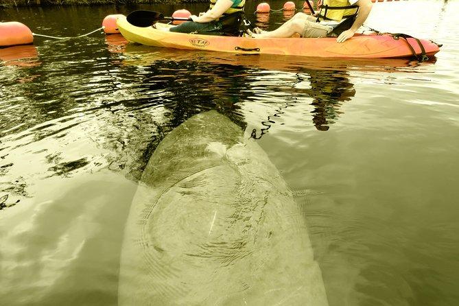Guided Manatee Kayaking Tours through Blue Spring, State Park