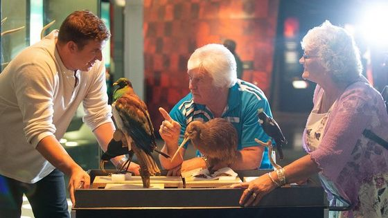 Museum of New Zealand Te Papa: Small Group Guided Tour