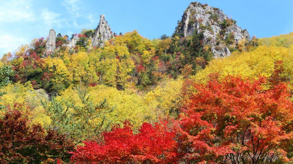 【大雪山(黒岳)】紅葉見頃時期-9月下旬~10月中旬