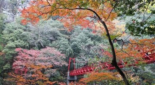 【長門峡】紅葉の見頃は11月上旬~11月中旬