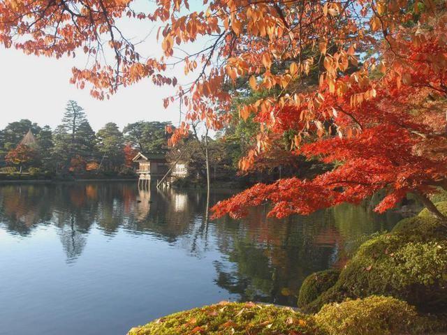 【兼六園】紅葉の見頃は11月上旬~11月下旬