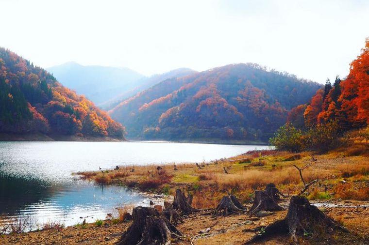【九頭竜湖】紅葉の見頃は11月上旬~11月下旬