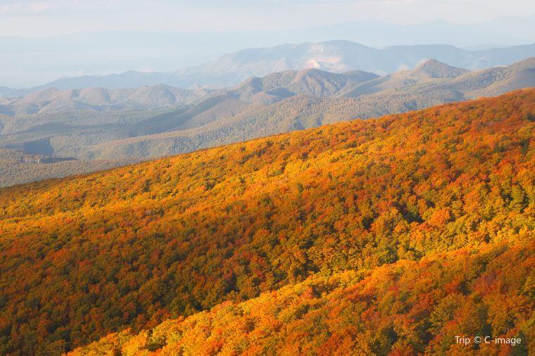 【八甲田山-ロープウェイはおすすめ】紅葉の見頃は10月上旬~10月下旬