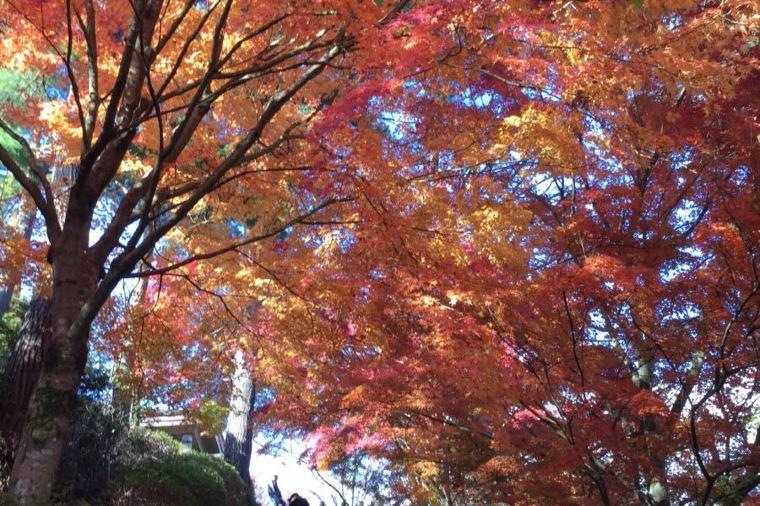 【吉野山】紅葉の見頃は10月中旬~11月上旬