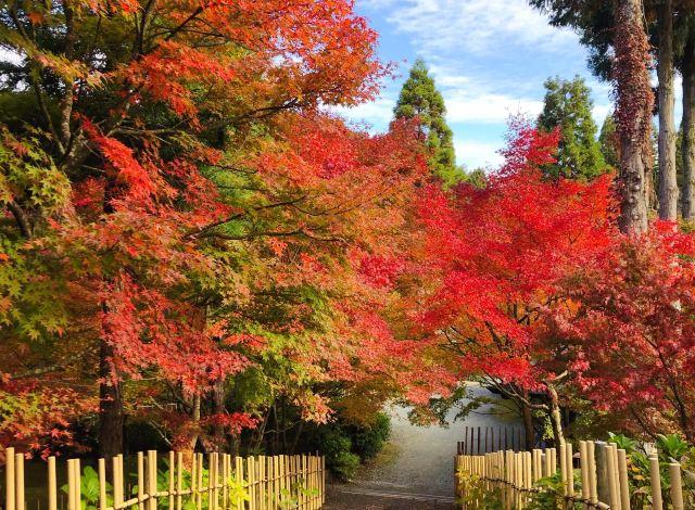 【呑山観音寺】紅葉の見頃は10月下旬~11月下旬