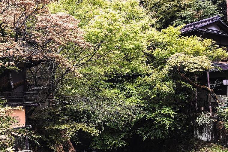【犬鳴山渓谷】紅葉の見頃は11月中旬~12月上旬
