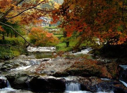 【八重滝】紅葉の見頃は10月下旬~11月中旬