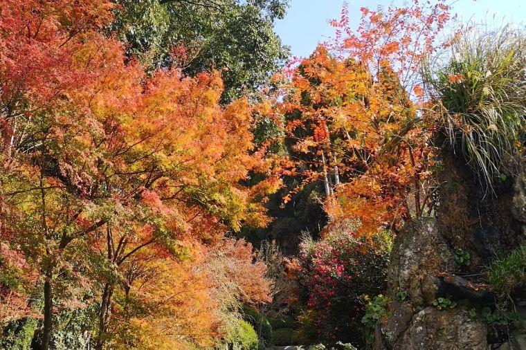 【川上峡】紅葉の見頃は11月中旬~11月下旬