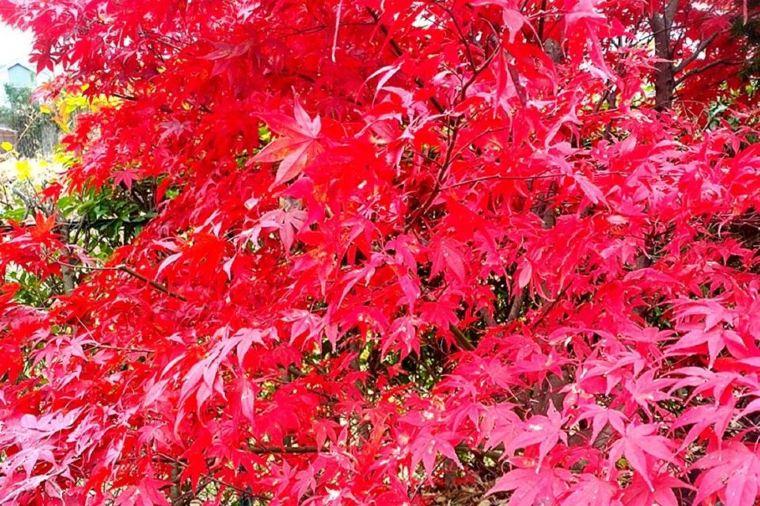 【佛通寺】紅葉の見頃は11月上旬~11月中旬