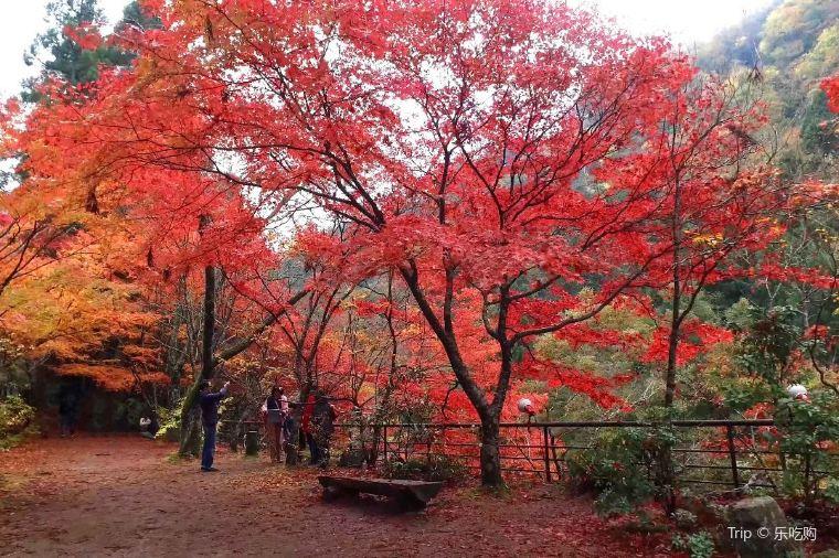 【奥津渓】紅葉の見頃は10月下旬~11月中旬