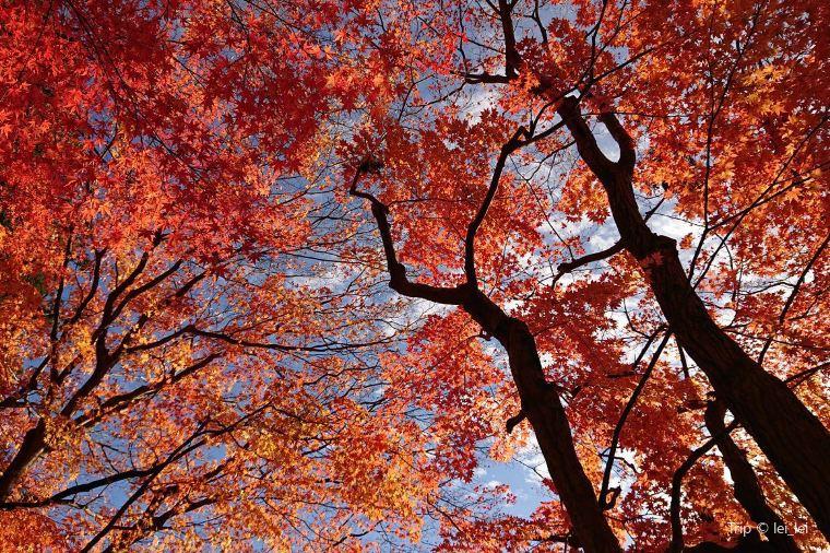 【下呂温泉】紅葉の見頃は11月上旬~11月中旬
