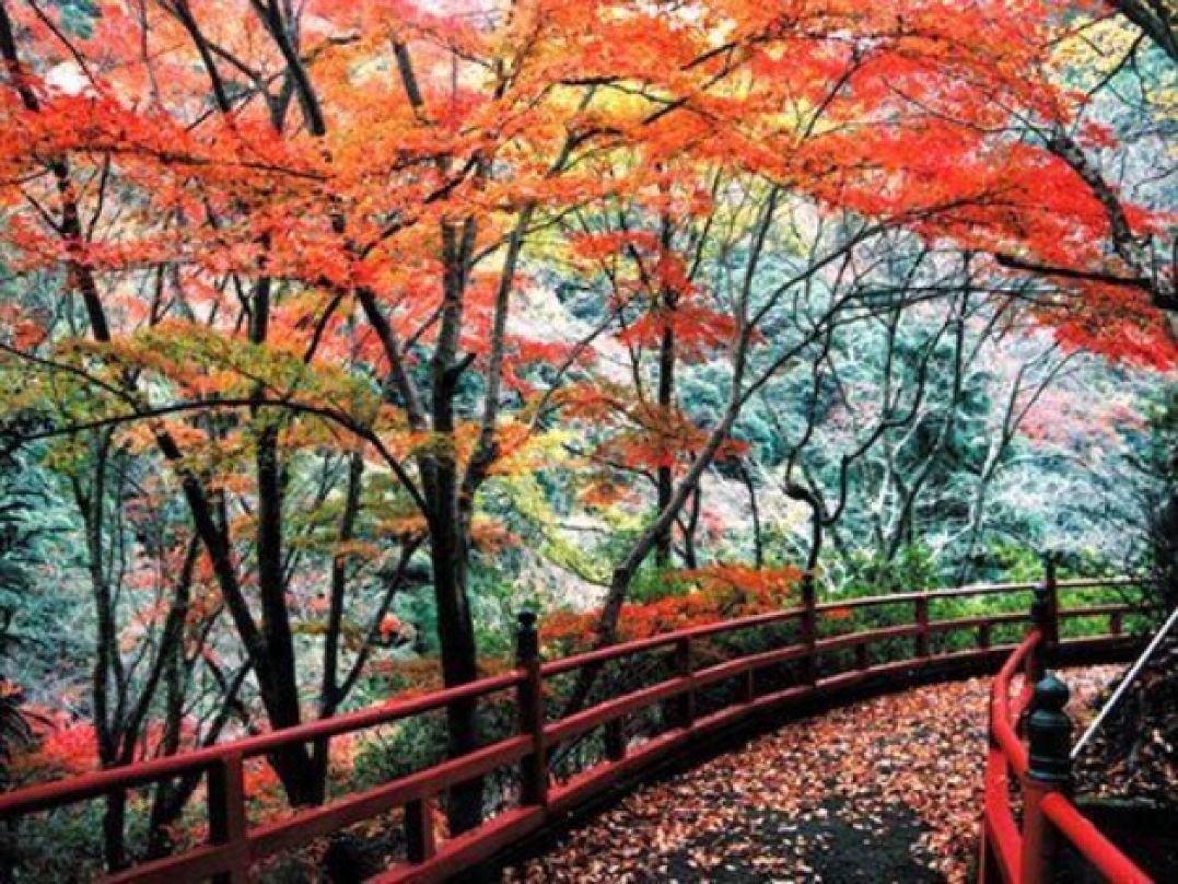 【奥道後 壱湯の守】紅葉の見頃は11月中旬~12月中旬