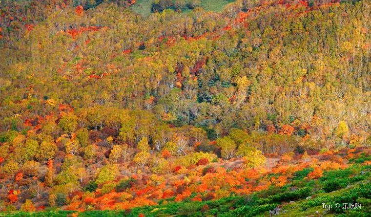 【那須高原】紅葉の見頃は10月上旬~11月上旬