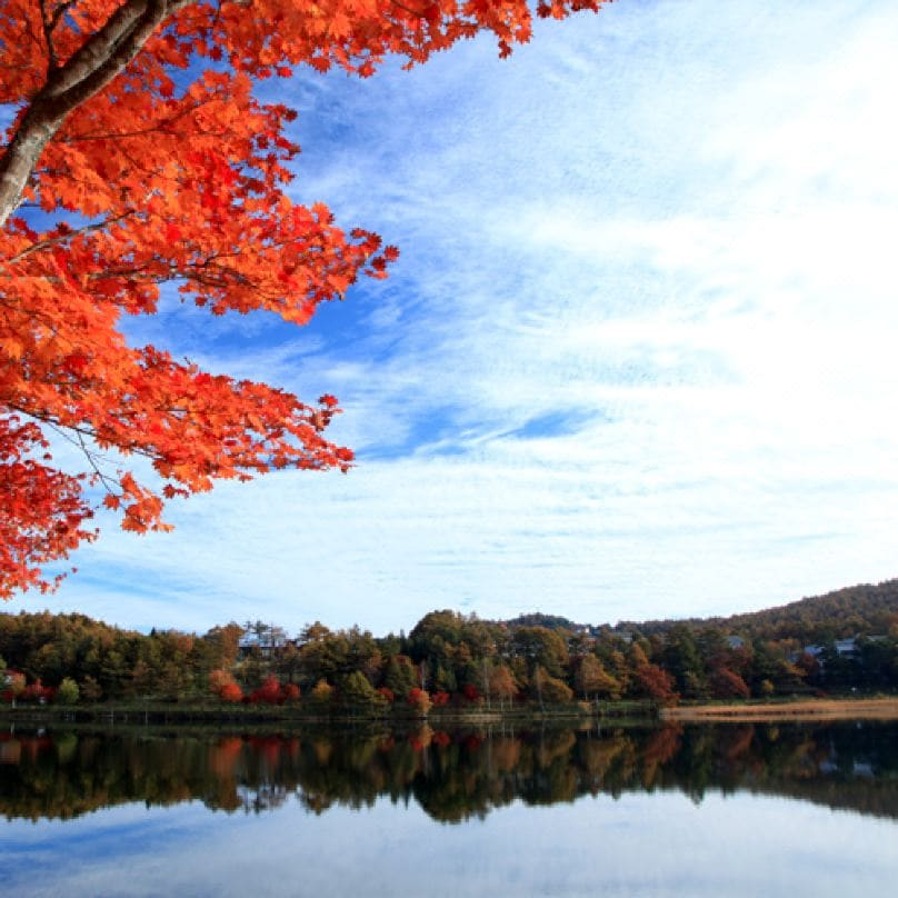 【白駒の池】紅葉の見頃は9月下旬~10月上旬