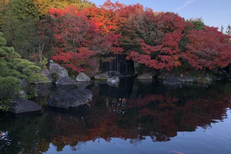 【姫路城西御屋敷跡庭園 好古園】紅葉の見頃は11月中旬~12月上旬