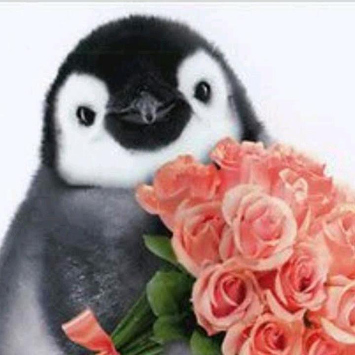 Penguin5268#