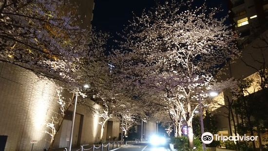 六本木櫻花坂