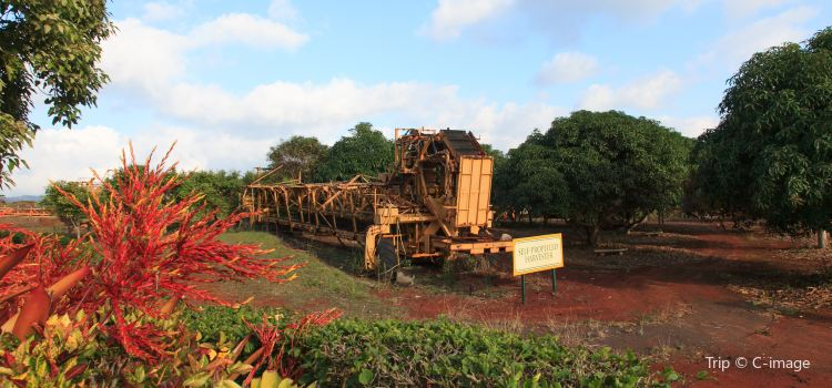 Dole Plantation1