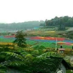 鳳凰塘橋香薰山谷用戶圖片