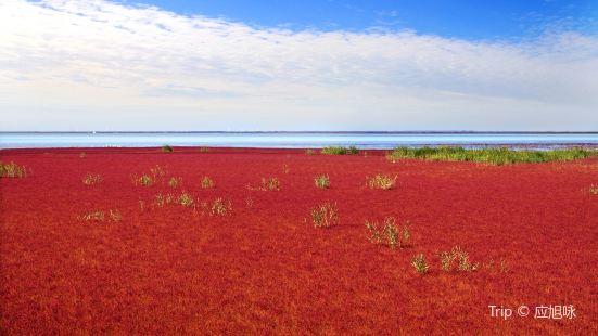 盤錦紅海灘風景區