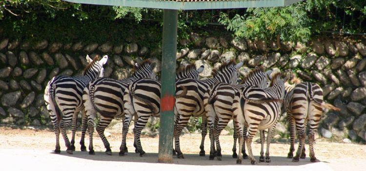 아사 동물원3