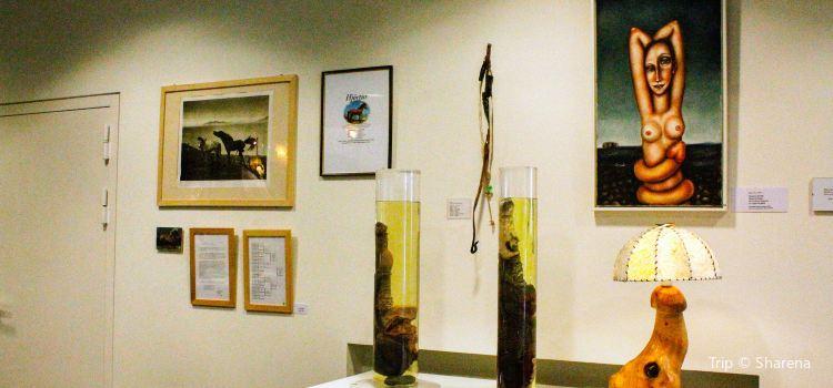 Icelandic Phallological Museum1