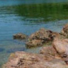 馬屎洲特別地區用戶圖片