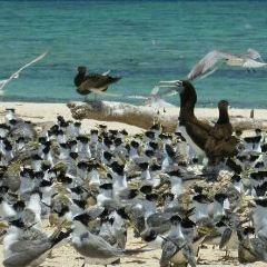 麥克拉斯沙島用戶圖片