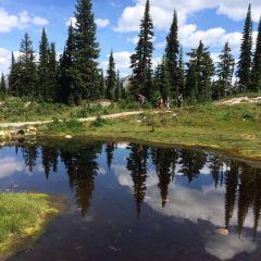 Mount Revelstoke National Park User Photo