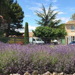Lavender Museum User Photo