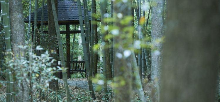 Yaolin National Forest Park3