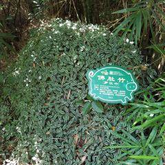 Yanoda Rainforest Cultural Tourism Zone User Photo