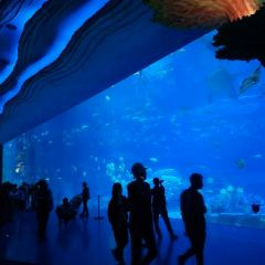 Zhuhai Chimelong Ocean Kingdom User Photo