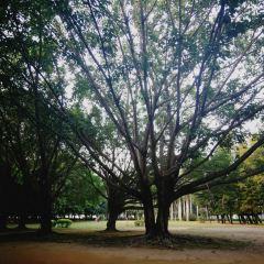Nanhu Park User Photo