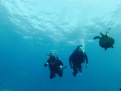 珊瑚海夢想號