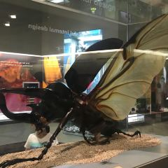 墨爾本博物館用戶圖片